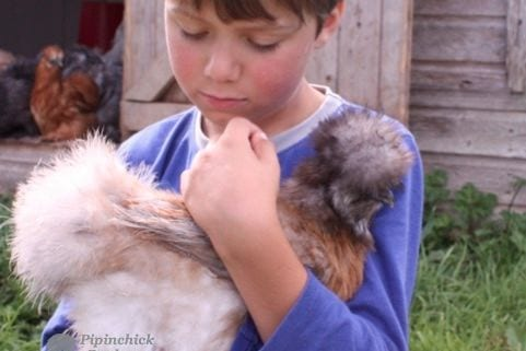 holding a silkie