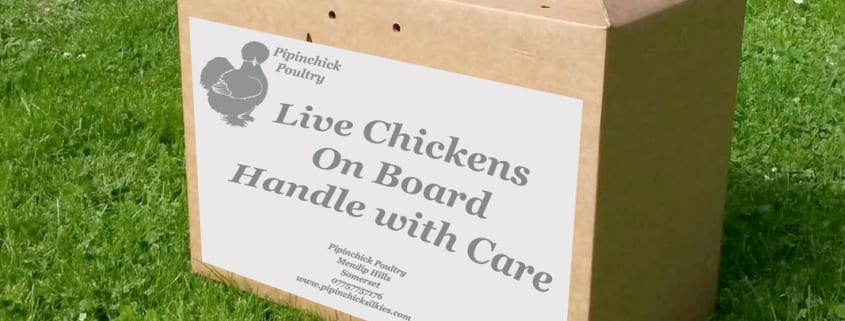 Live Chickens Delivery Box