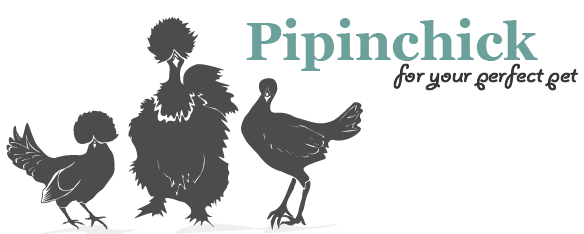 Pipinchick Silkies